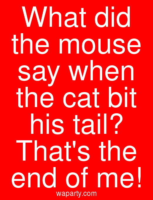 What did the mouse say when the cat bit his tail? Thats the end of me!