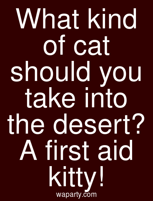 What kind of cat should you take into the desert? A first aid kitty!