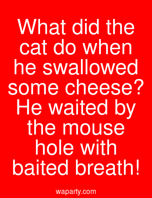 What did the cat do when he swallowed some cheese? He waited by the mouse hole with baited breath!