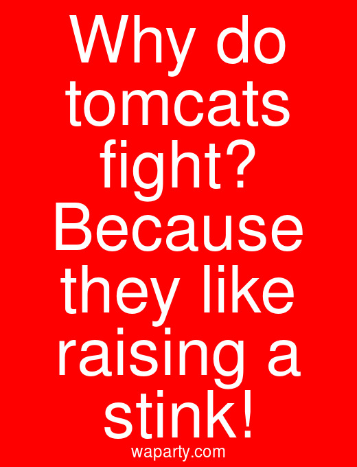 Why do tomcats fight? Because they like raising a stink!