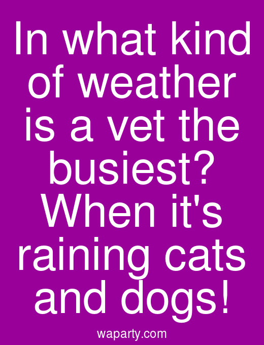In what kind of weather is a vet the busiest? When its raining cats and dogs!