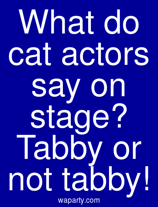 What do cat actors say on stage? Tabby or not tabby!