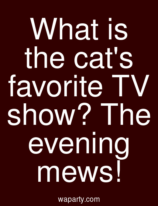 What is the cats favorite TV show? The evening mews!