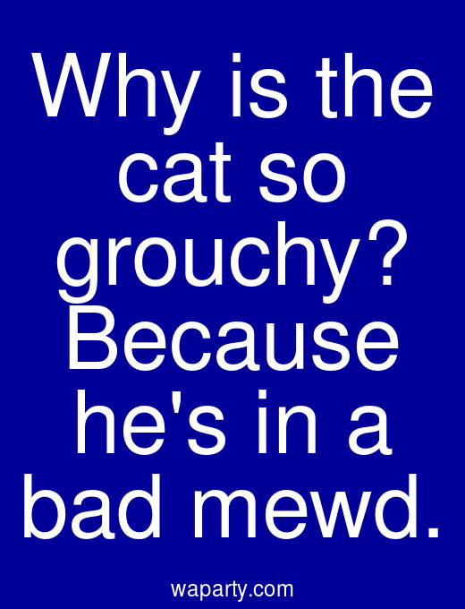 Why is the cat so grouchy? Because hes in a bad mewd.