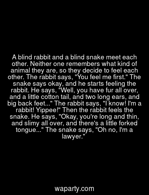 A blind rabbit and a blind snake meet each other. Neither one remembers what kind of animal they are, so they decide to feel each other. The rabbit says, You feel me first. The snake says okay, and he starts feeling the rabbit. He says, Well, you have fur all over, and a little cotton tail, and two long ears, and big back feet... The rabbit says, I know! Im a rabbit! Yippee! Then the rabbit feels the snake. He says, Okay, youre long and thin, and slimy all over, and theres a little forked tongue... The snake says, Oh no, Im a lawyer.
