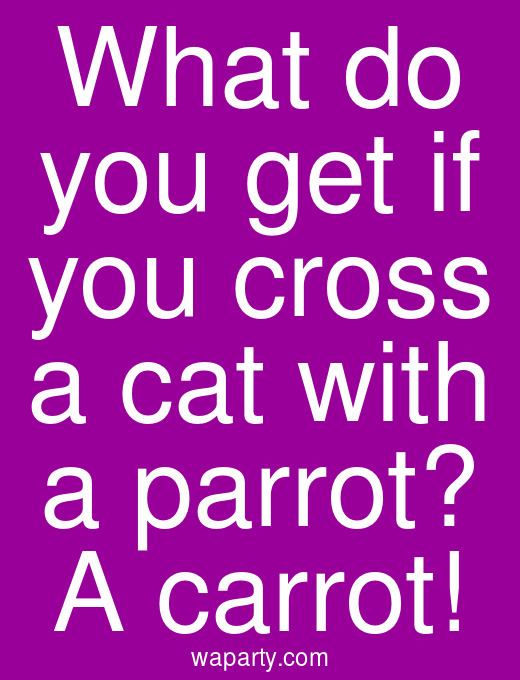What do you get if you cross a cat with a parrot? A carrot!
