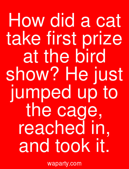 How did a cat take first prize at the bird show? He just jumped up to the cage, reached in, and took it.