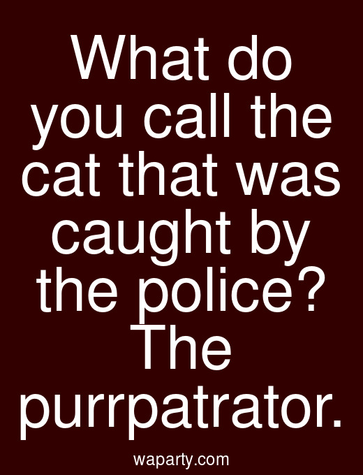 What do you call the cat that was caught by the police? The purrpatrator.
