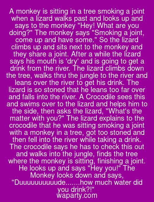 A monkey is sitting in a tree smoking a joint when a lizard walks past and looks up and says to the monkey Hey! What are you doing? The monkey says Smoking a joint, come up and have some. So the lizard climbs up and sits next to the monkey and they share a joint. After a while the lizard says his mouth is dry and is going to get a drink from the river. The lizard climbs down the tree, walks thru the jungle to the river and leans over the river to get his drink. The lizard is so stoned that he leans too far over and falls into the river. A Crocodile sees this and swims over to the lizard and helps him to the side, then asks the lizard, Whats the matter with you? The lizard explains to the crocodile that he was sitting smoking a joint with a monkey in a tree, got too stoned and then fell into the river while taking a drink. The crocodile says he has to check this out and walks into the jungle, finds the tree where the monkey is sitting, finishing a joint. He looks up and says Hey you! The Monkey looks down and says, Duuuuuuuuuude.......how much water did you drink?!