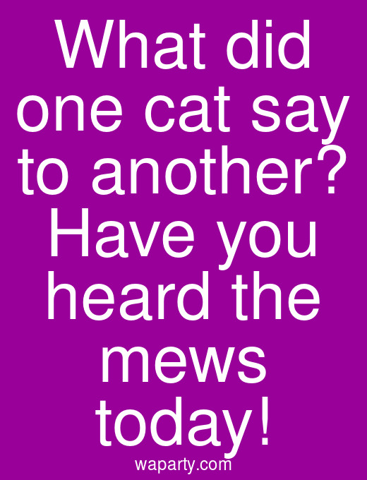 What did one cat say to another? Have you heard the mews today!