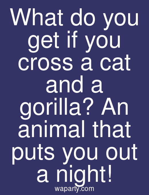 What do you get if you cross a cat and a gorilla? An animal that puts you out a night!