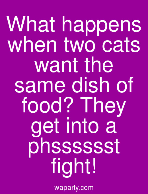 What happens when two cats want the same dish of food? They get into a phsssssst fight!