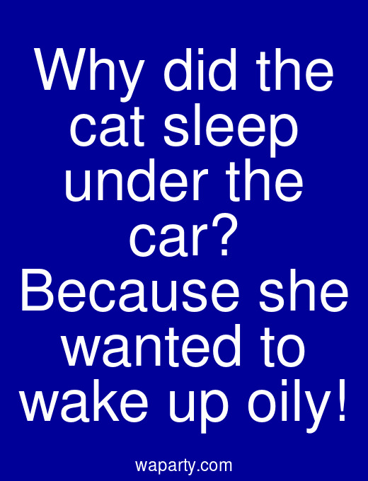 Why did the cat sleep under the car? Because she wanted to wake up oily!