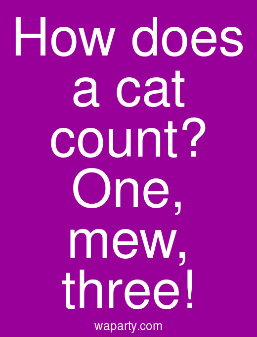 How does a cat count? One, mew, three!