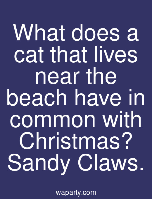 What does a cat that lives near the beach have in common with Christmas? Sandy Claws.