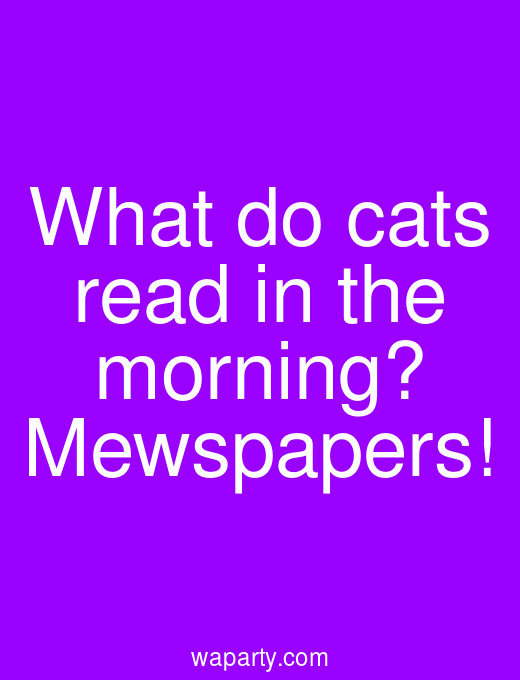 What do cats read in the morning? Mewspapers!