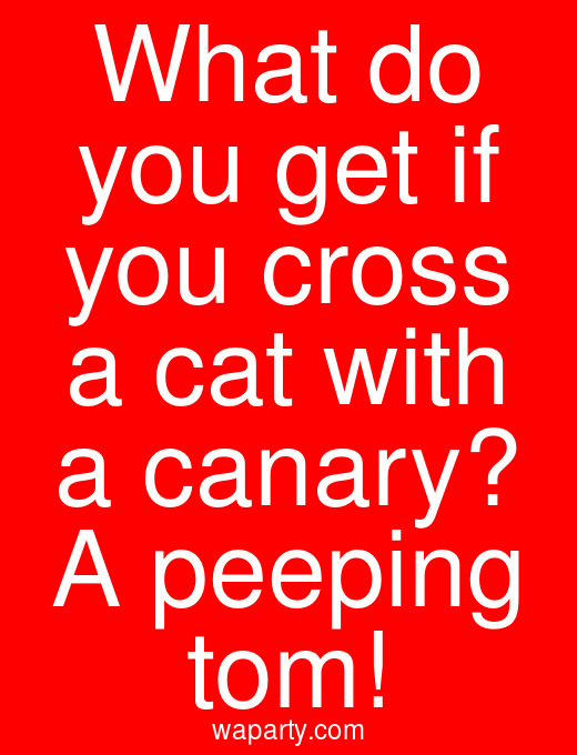 What do you get if you cross a cat with a canary? A peeping tom!
