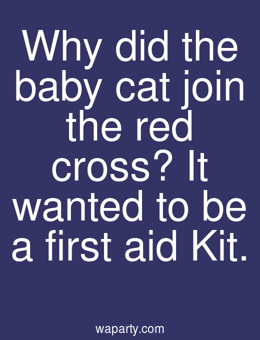 Why did the baby cat join the red cross? It wanted to be a first aid Kit.