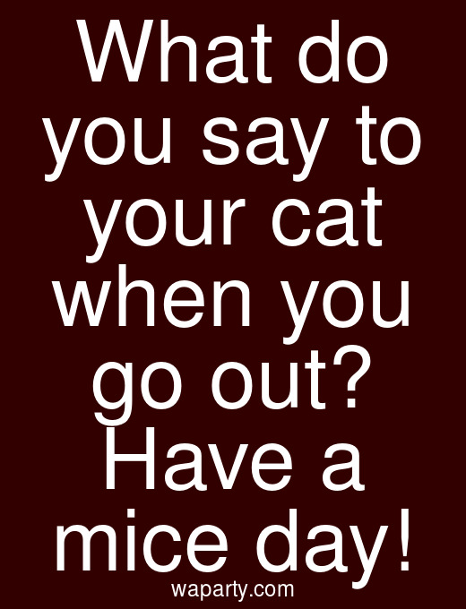 What do you say to your cat when you go out? Have a mice day!