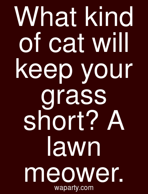 What kind of cat will keep your grass short? A lawn meower.