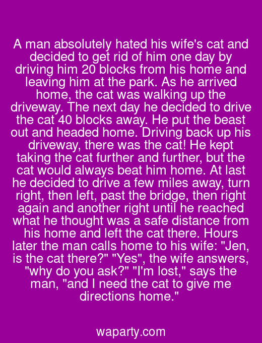 A man absolutely hated his wifes cat and decided to get rid of him one day by driving him 20 blocks from his home and leaving him at the park. As he arrived home, the cat was walking up the driveway. The next day he decided to drive the cat 40 blocks away. He put the beast out and headed home. Driving back up his driveway, there was the cat! He kept taking the cat further and further, but the cat would always beat him home. At last he decided to drive a few miles away, turn right, then left, past the bridge, then right again and another right until he reached what he thought was a safe distance from his home and left the cat there. Hours later the man calls home to his wife: Jen, is the cat there? Yes, the wife answers, why do you ask? Im lost, says the man, and I need the cat to give me directions home.