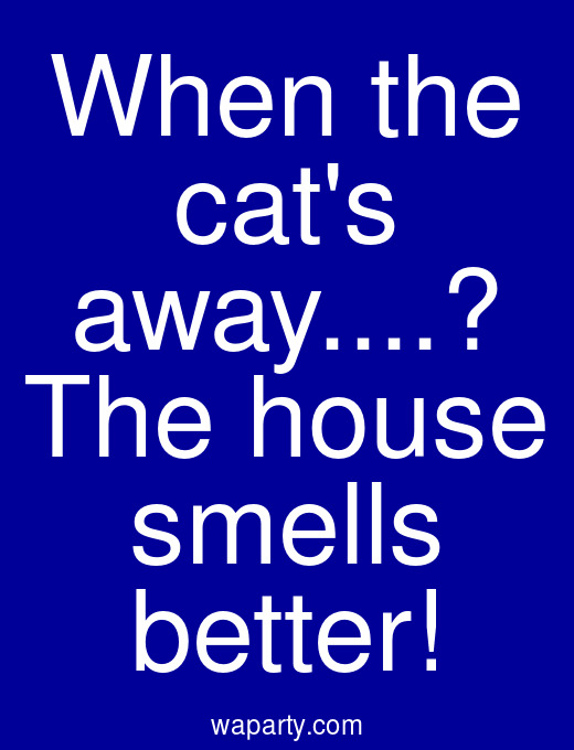 When the cats away...? The house smells better!