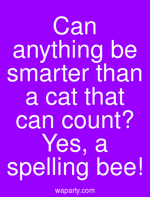 Can anything be smarter than a cat that can count? Yes, a spelling bee!