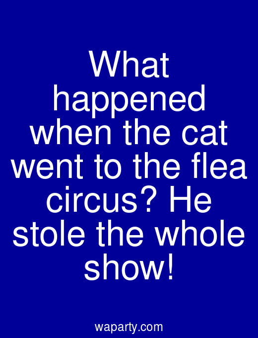 What happened when the cat went to the flea circus? He stole the whole show!