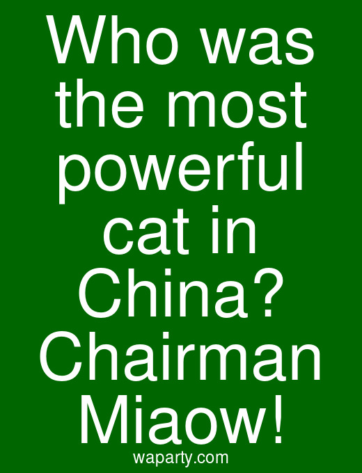 Who was the most powerful cat in China? Chairman Miaow!