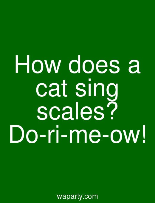 How does a cat sing scales? Do-ri-me-ow!