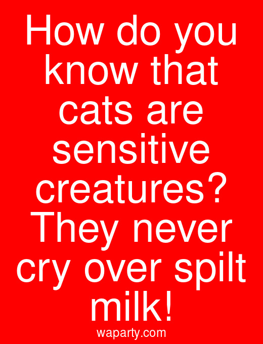 How do you know that cats are sensitive creatures? They never cry over spilt milk!