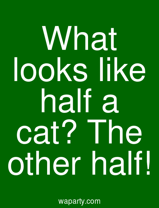 What looks like half a cat? The other half!