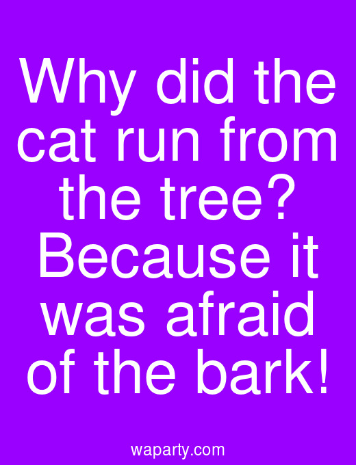 Why did the cat run from the tree? Because it was afraid of the bark!