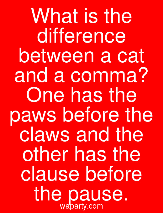 What is the difference between a cat and a comma? One has the paws before the claws and the other has the clause before the pause.