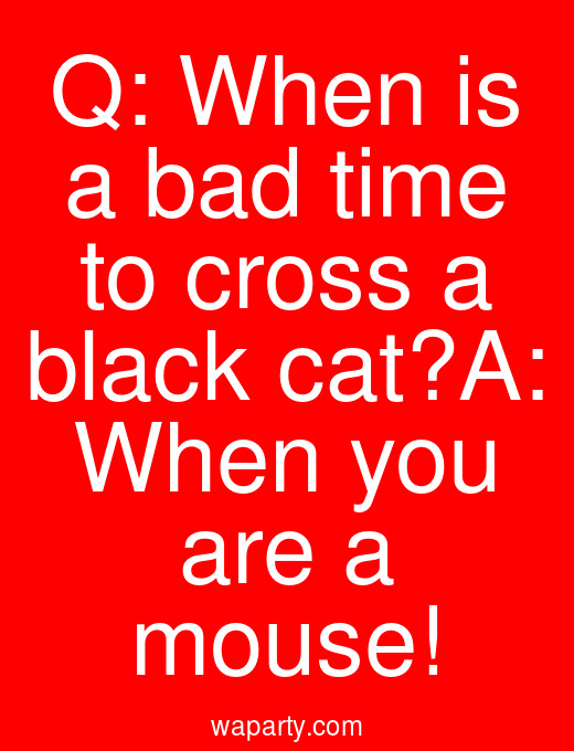 Q: When is a bad time to cross a black cat?A: When you are a mouse!