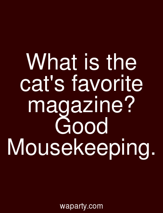 What is the cats favorite magazine? Good Mousekeeping.