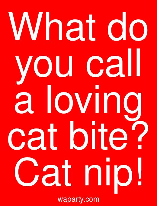 What do you call a loving cat bite? Cat nip!