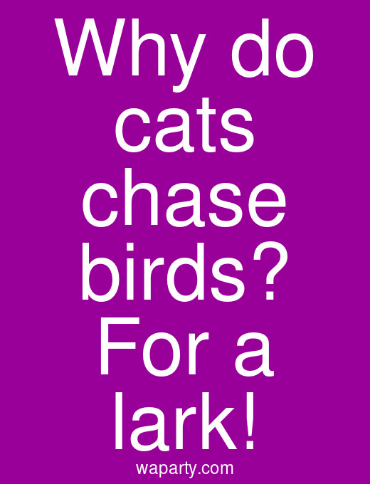 Why do cats chase birds? For a lark!