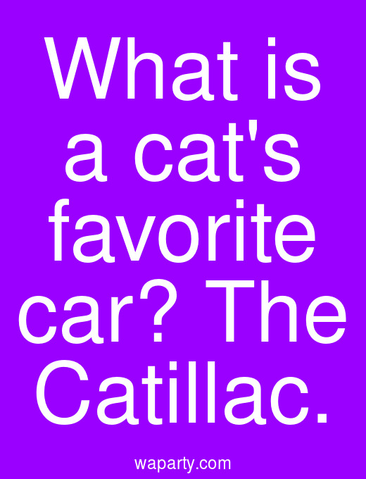 What is a cats favorite car? The Catillac.