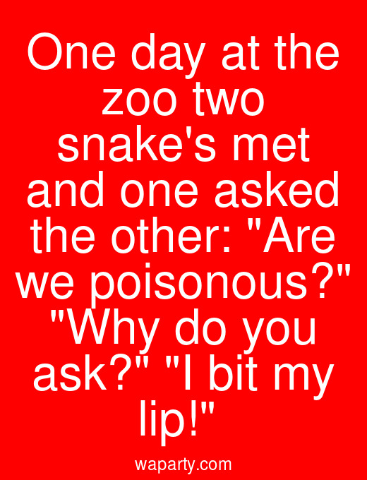 One day at the zoo two snakes met and one asked the other: Are we poisonous? Why do you ask? I bit my lip!