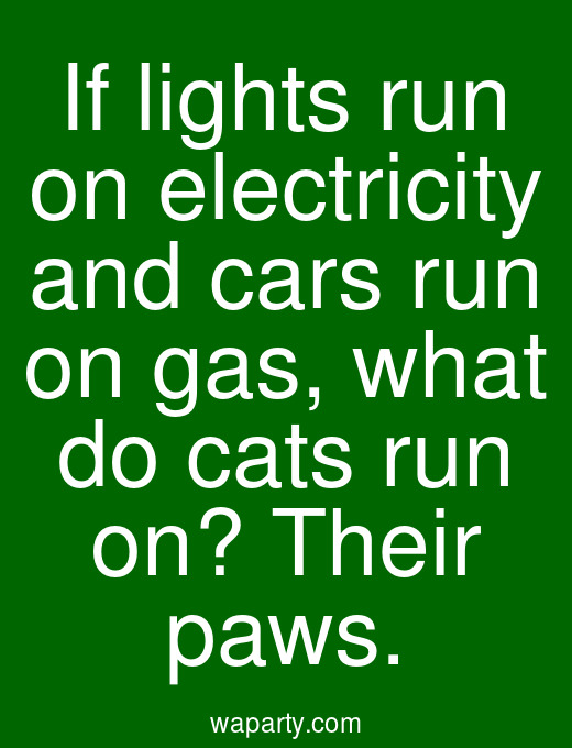 If lights run on electricity and cars run on gas, what do cats run on? Their paws.
