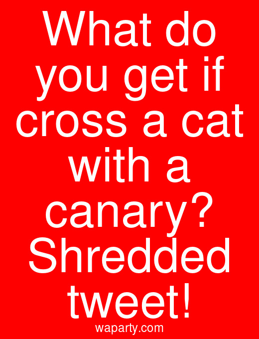 What do you get if cross a cat with a canary? Shredded tweet!