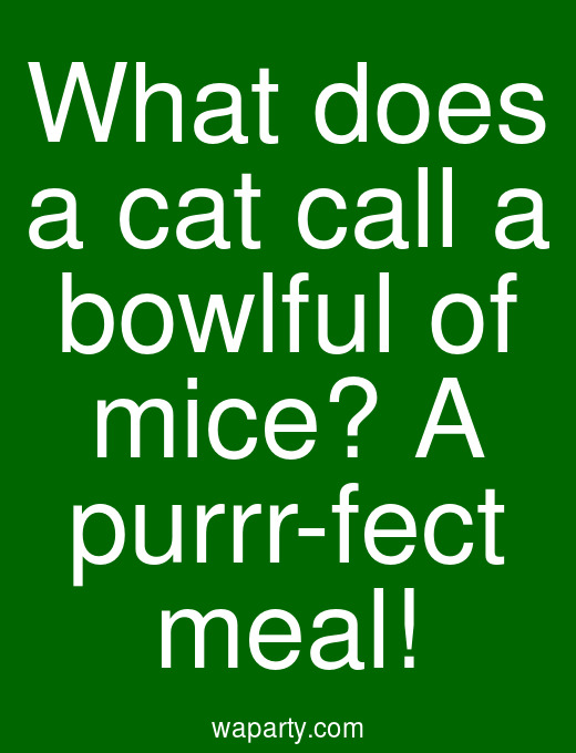 What does a cat call a bowlful of mice? A purrr-fect meal!
