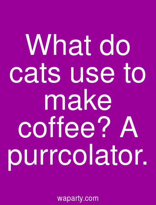 What do cats use to make coffee? A purrcolator.