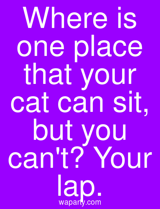 Where is one place that your cat can sit, but you cant? Your lap.