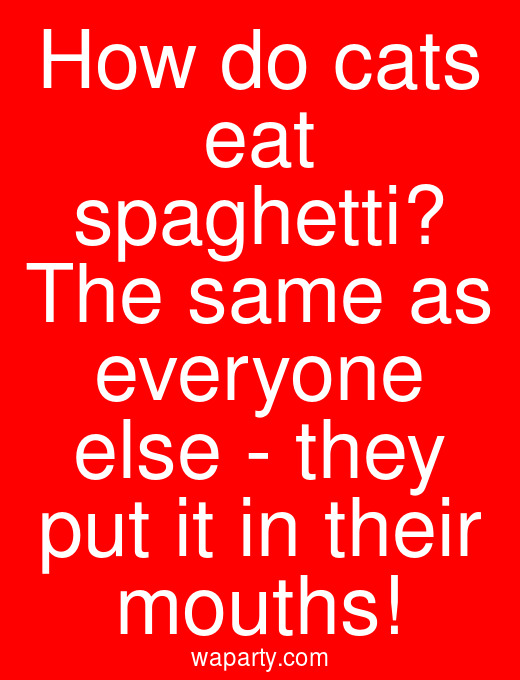 How do cats eat spaghetti? The same as everyone else - they put it in their mouths!
