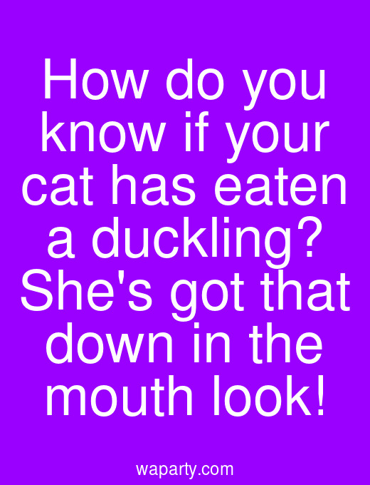 How do you know if your cat has eaten a duckling? Shes got that down in the mouth look!