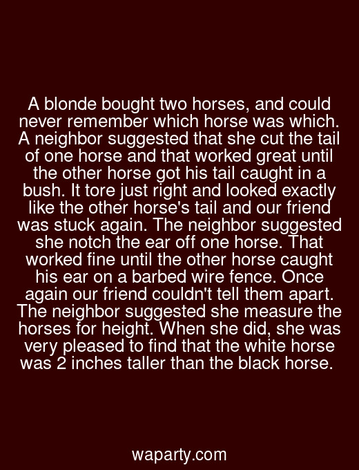 A blonde bought two horses, and could never remember which horse was which. A neighbor suggested that she cut the tail of one horse and that worked great until the other horse got his tail caught in a bush. It tore just right and looked exactly like the other horses tail and our friend was stuck again. The neighbor suggested she notch the ear off one horse. That worked fine until the other horse caught his ear on a barbed wire fence. Once again our friend couldnt tell them apart. The neighbor suggested she measure the horses for height. When she did, she was very pleased to find that the white horse was 2 inches taller than the black horse.