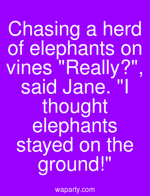 Chasing a herd of elephants on vines Really?, said Jane. I thought elephants stayed on the ground!