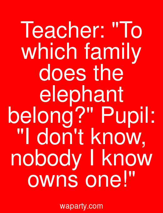 Teacher: To which family does the elephant belong? Pupil: I dont know, nobody I know owns one!